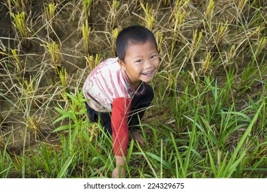Yen Bai, Vietnam - Sep 27, 2014: unidentified Hmong boy plays on terraced paddy field in harvesting season in Mu Cang Chai district