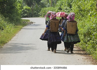 Yen Bai, Vietnam - Sep 27, 2014: Asian Hmong minority women farmers walking to the paddy field on a country road in time of harvest season in Mu Cang Chai mountain district, north west of Vietnam.