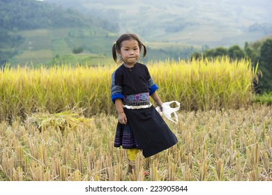 Yen Bai, Vietnam - Sept 28, 2014: Portrait of Hmong child play on terraced paddy field waiting for her mother working on field in harvesting season