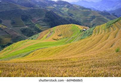 YEN BAI, VIETNAM, September 27, 2016 terraced rice fields. Mu Cang Chai high mountains, Yen Bai province, at harvest time