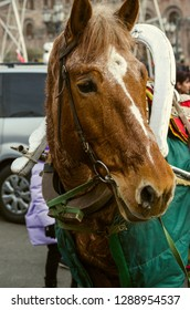 Yerevan,Armenia,December 03,2018:Perspiring red horse with white spots covered with a green raincoat in a harness is resting after a trip with children on the square in Yerevan