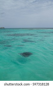 Yes, that black shape is a stingray!