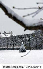 Yew under the snow and the branch. French garden (France)