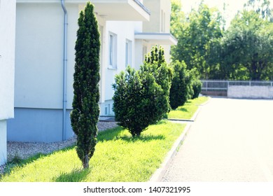yew-tree alley near apartment bouilding