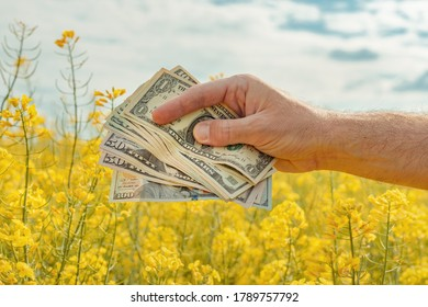Yield and profit of canola rapeseed growth, farmer holding american paper currency in field