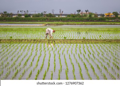 Yilan County, Taiwan - February 24, 2018 - Farmers planting rice in paddy fields in Dongshan Township