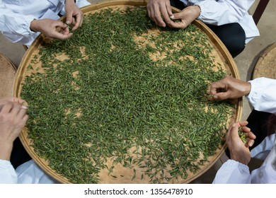 Yiliang, China - March 23, 2019: Female workers selectingthe best tea leaves in a Baohong Tea production processing laboratory