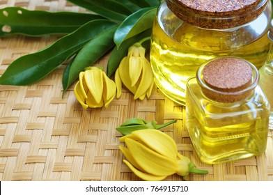 ylang ylang flower and Ylang Ylang essential Oil