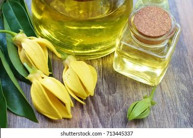 ylang ylang flower and Ylang Ylang Oil