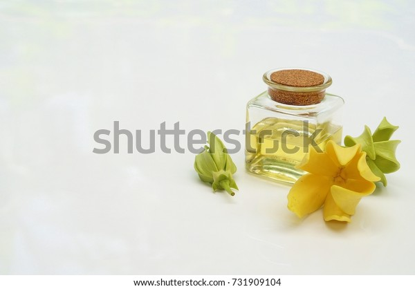 ylang ylang flower and Ylang Ylang Oil