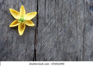 ylang ylang flower on grunge background.