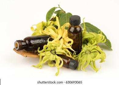 Ylang Ylang Fragrance.
