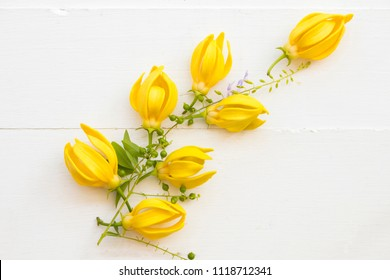 ylang ylang yellow flowers of asia arrangement on background white wood