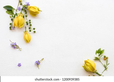 ylang ylang yellow flowers of asia herbal flora arrangement on background white wooden
