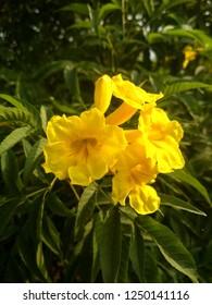 Yllowe flower wallpapper