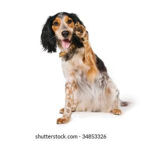 Yo! Dog waving his paw