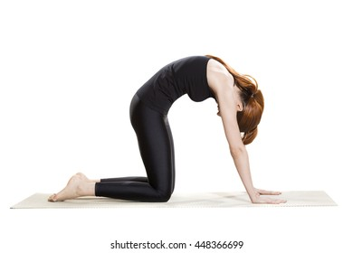 Yoga Cat Pose - Marjaryasana
