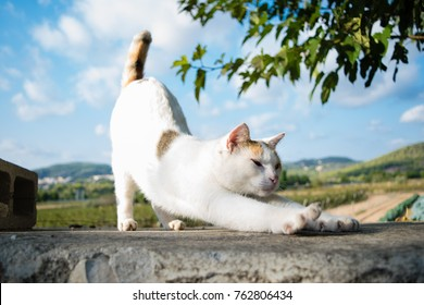 Yoga cat stretches herself elevating back, good morning