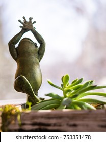 Yoga frog in tree pose. figurine statue with succulent house plant in sunny window. cute green little object with hands in air smiling. soft focus background