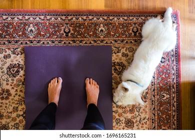マットとペットの西高地の白いテリア犬を飼い主の隣に置いた敷物の上の家でのヨガ