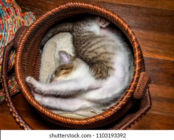 Yoga kitty! A white and tabby kitten stretches inside a round basket, his body making an 's' shape. Shot from above.