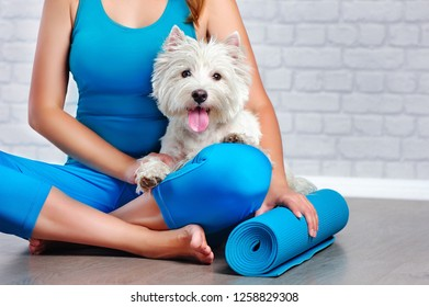 Yoga practice with a white dog