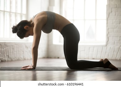 Yogi woman practicing yoga concept, standing in Cat exercise, Marjaryasana pose, working out, wearing black sportswear bra and pants, full length silhouette on white loft studio background. Side view