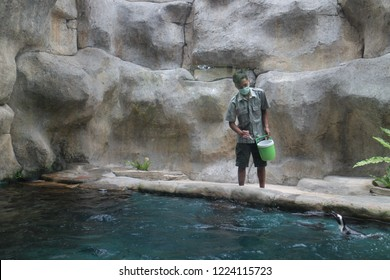 Yogyakarta 20 Oct 2018 - An animal instructor is giving a small fish with his hand to the penguin during feeding time in a zoo visitor hours
