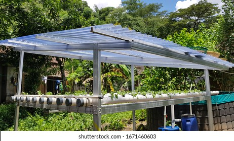 Yogyakarta/Indonesia - Maret 06 2020: Growing pakcoy on aquaponic cultivation system using PVC pipe and fish pond.