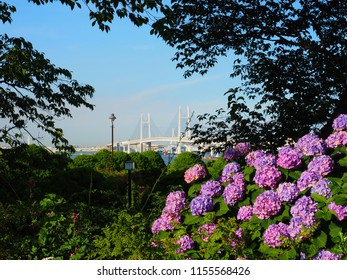 Yokohama Baybridge and hydrangea