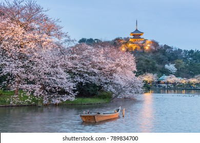 Yokohama Sankeien garden , a traditional and typical Japanese-style garden in Sakura bloom with light up