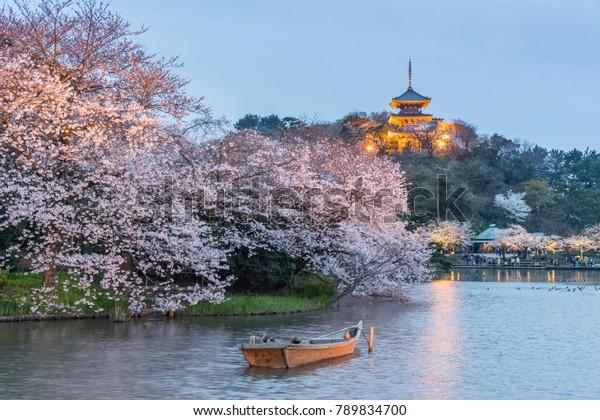 横浜三渓園 – 桜の伝統的で代表的な和風庭園
