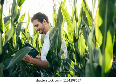 Yong handsome agronomist holds tablet touch pad computer in the corn field and examining crops before harvesting. Agribusiness concept. agricultural engineer standing in a corn field with a tablet.