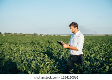Yong handsome agronomist holds tablet touch pad computer in the soy field and examining crops before harvesting. Agribusiness concept. agricultural engineer standing in a corn field with a tablet.