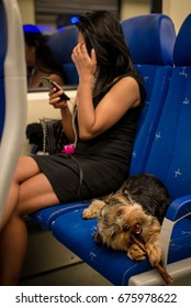 A Yorkie chews on a bully stick while riding the train with his owner. Amsterdam, the Netherlands.
