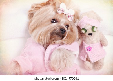 Yorkie and Teddy Bear Friend at the Beauty Salon Spa. Textured and Toned Background