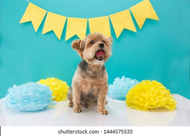 yorkshire dog birhtday party. green and yellow decoration. pet celebration. Happy birthday card.