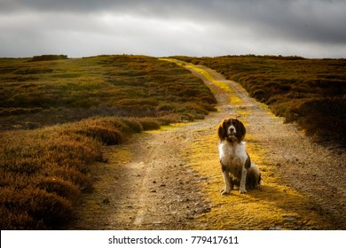 Yorkshire moors dog walk