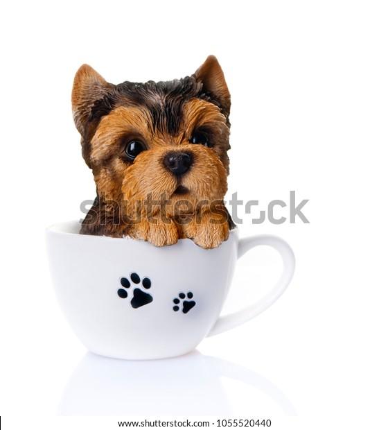 cute puppy in a cup