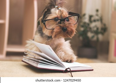 Yorkshire terrier with her paw on top of the book wearing glasses.