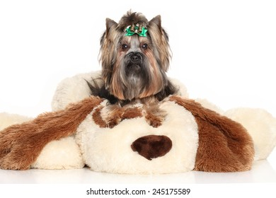 Yorkshire terrier lying on large soft toy