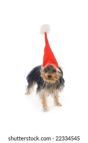 Yorkshire terrier in a New Year's hat isolated on a white background