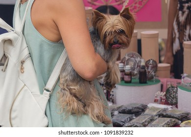 Yorkshire Terrier on the hands of a woman shopping. Dogs
