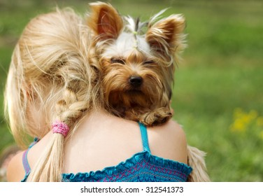 Yorkshire terrier on the shoulder of 6 year old girl. looking into the camera