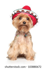 Yorkshire terrier posing in mexican hat on a white background