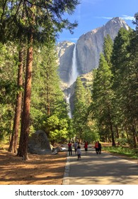 Yosemite Falls in Yosemite National Park, California. View from the walking path, people walking and stopping to take pictures. Tall trees on the sides and blue sky above.