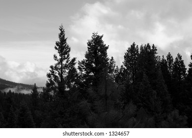 Yosemite forest in monochrome
