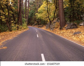 Yosemite National Park, CA in the season of fall with all its golden glow/Yosemite/Maples line the forest edge, welcoming visitors to one of the United States most popular parks.