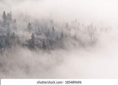 Yosemite Trees Through the Clouds