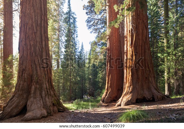 Yosemite Valley, Yosemite NP, Californie, États-Unis